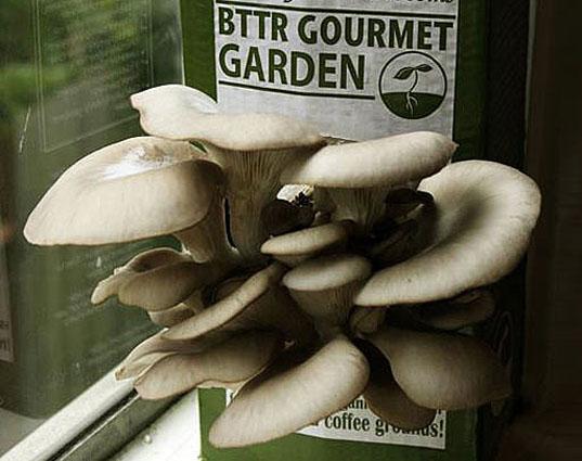 Идея бизнеса: Производство и реализация наборов для выращивания грибов дома
